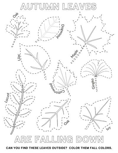 Free Autumn Fall Leaves Coloring Tracing Page Autumn Leaves