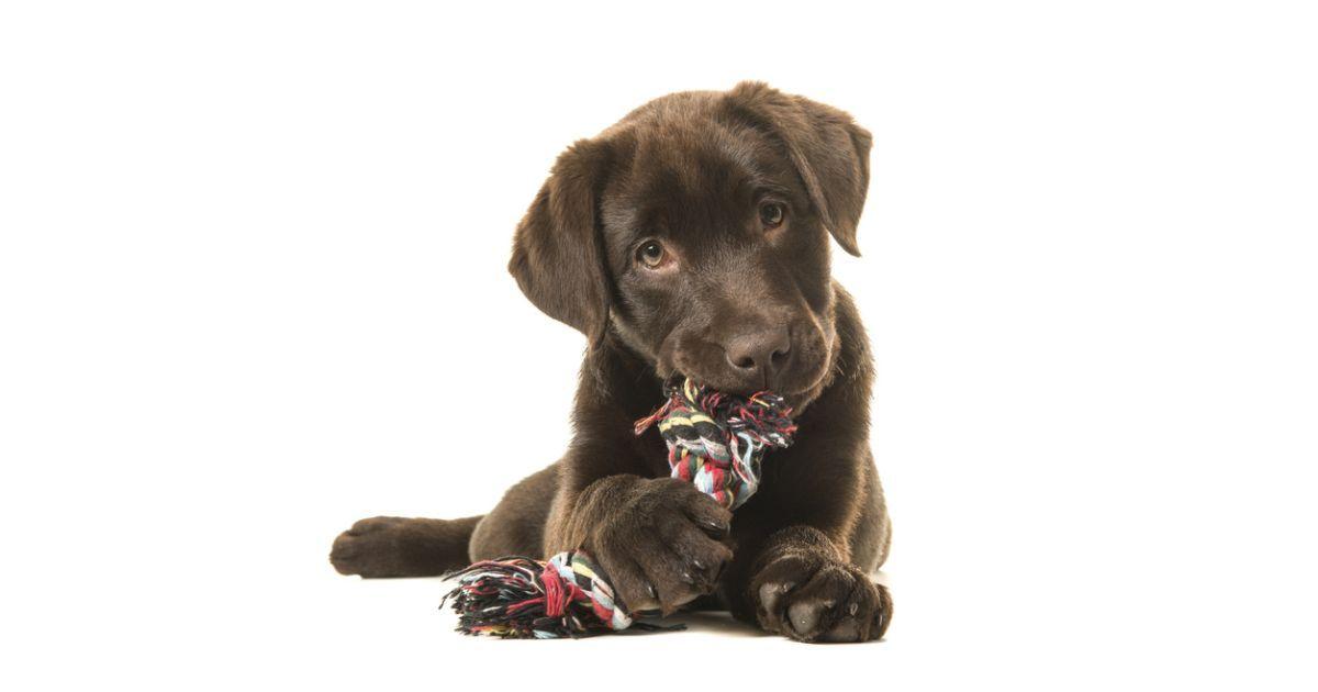 Trennungsfrage Was Passiert Mit Einem Hund Nach Der Scheidung