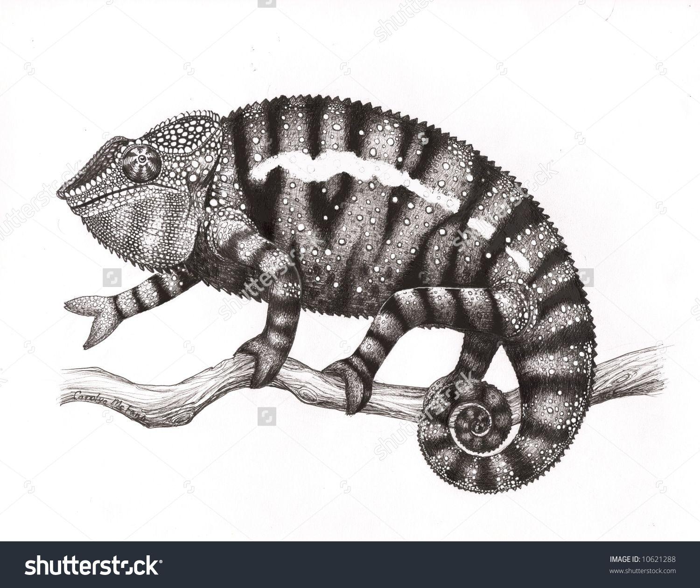Uncategorized Chameleon Drawings chameleon drawings google haku viidakko pinterest chameleons haku