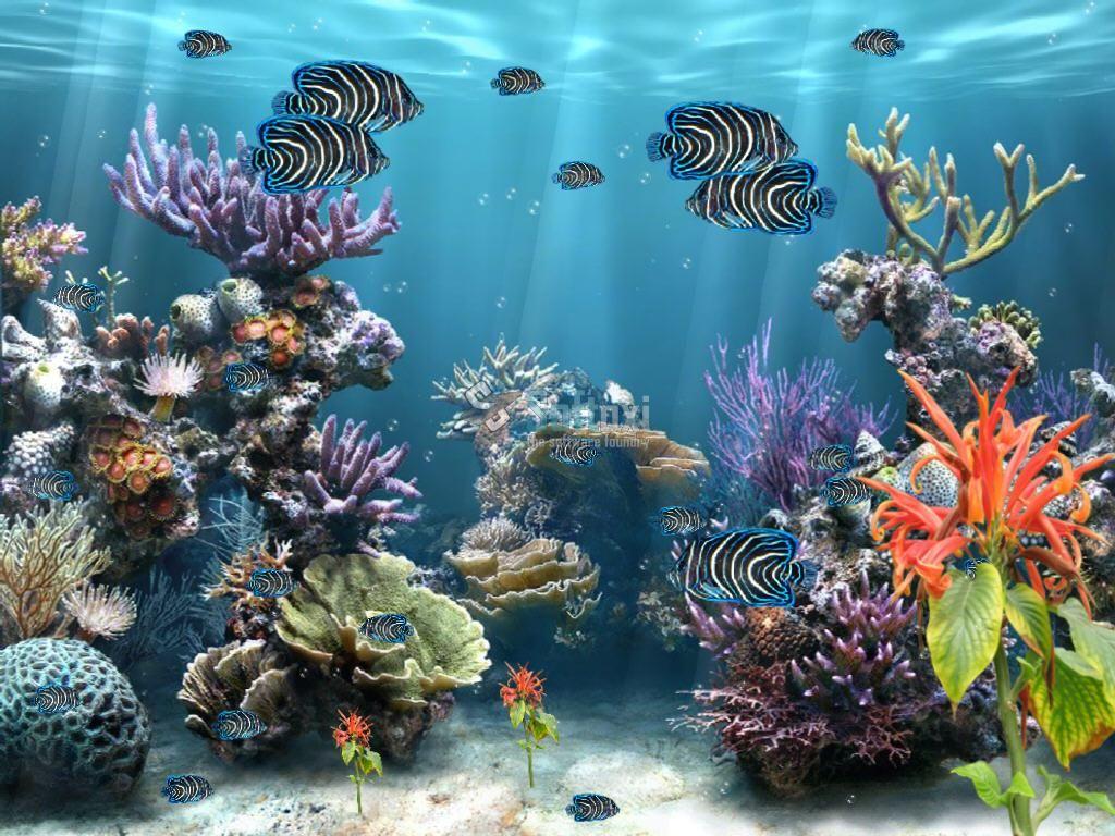 Fish Painting Idea Animated Desktop Backgrounds 3d Animation Wallpaper Moving Desktop Backgrounds