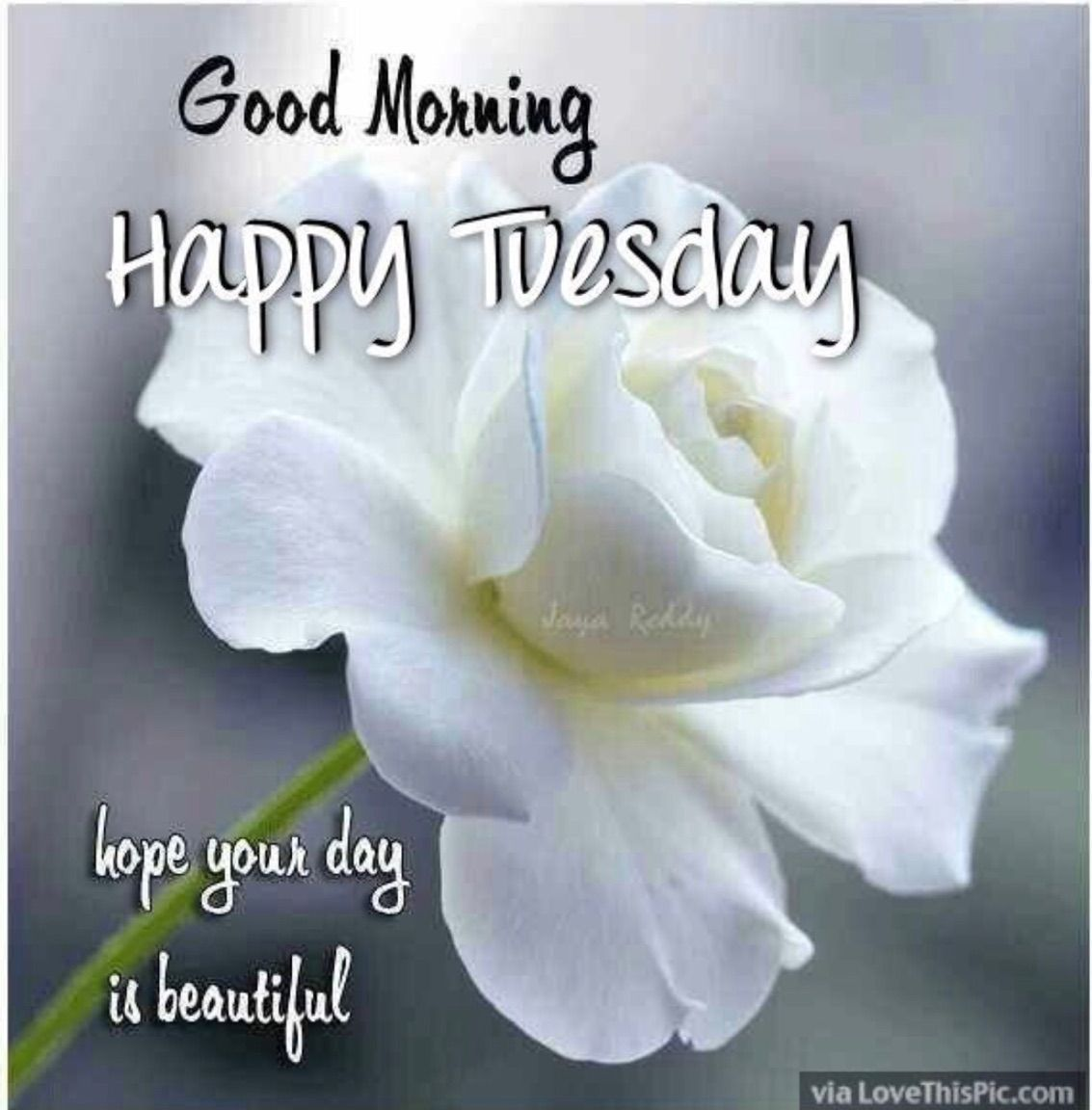 Pin by beverley green on quotes pinterest tuesday greetings tuesday greetings morning sayings good morning wishes daily inspiration roses encouragement scriptures happy birthday inspirational quotes m4hsunfo