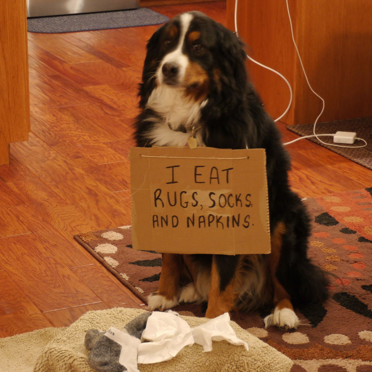 Dog Eating Wool Rug: I Eat Rugs, Socks And Napkins.
