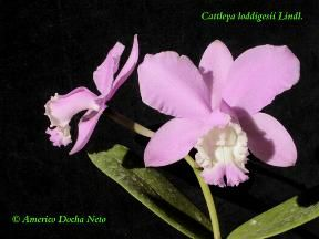 Bienvenidos a la primera Exposición Virtual de Orquídeas