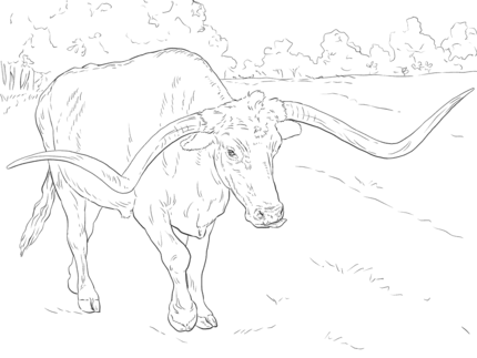 Click Realistic Texas Longhorn Coloring Page For Printable Version