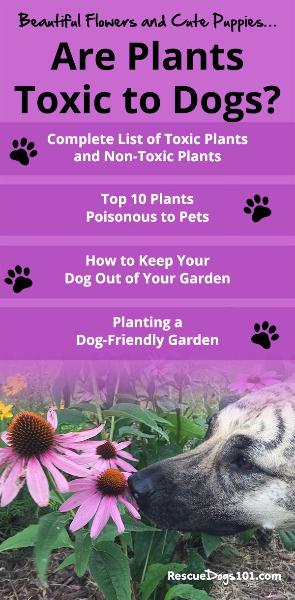 Beautiful Flowers And Cute Puppies Are Plants Toxic To Dogs Plants Toxic To Dogs Dog Friendly Garden Dog Allergies
