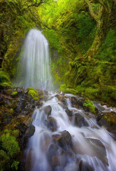 Alder Falls, Columbia River Gorge - Oregon