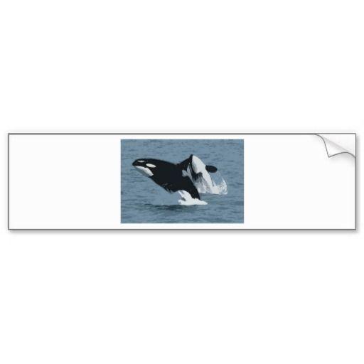 Orka Whale Bumper Sticker
