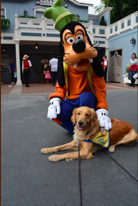 Dog Takes Pictures At Disneyland