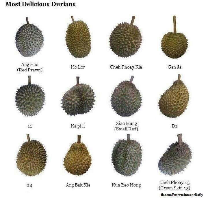 Kebun Durian Indonesia