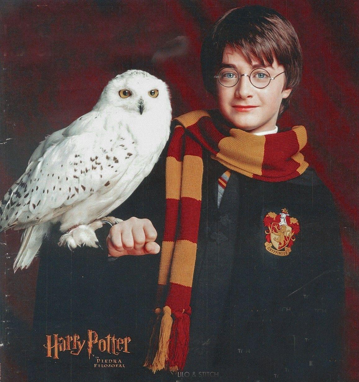 Harry Potter Harry Potter Characters Harry Potter Owl Harry James Potter