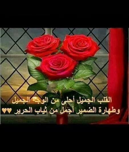 القلب الجميل | Arabic quotes, Rose, Flowers