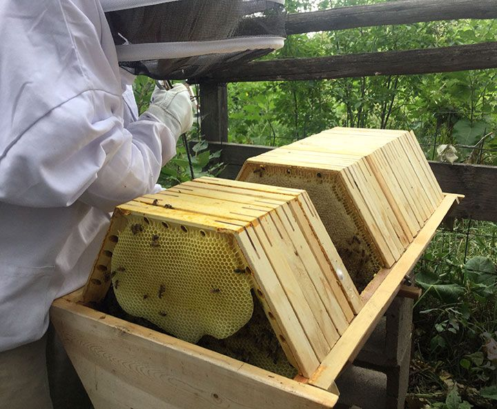 The Fully Assembled Cathedral Hive Includes: Complete Hive Body, Which  Includes Top And Bottom Section 21 Hexagonal Shaped Bars With Passage Holes  And Vent