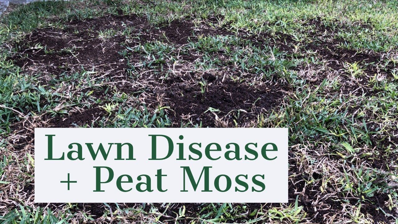 Fungus And Peat Moss 2nd Milo App Of 2019 Youtube Peat Moss Lawn Work Peat