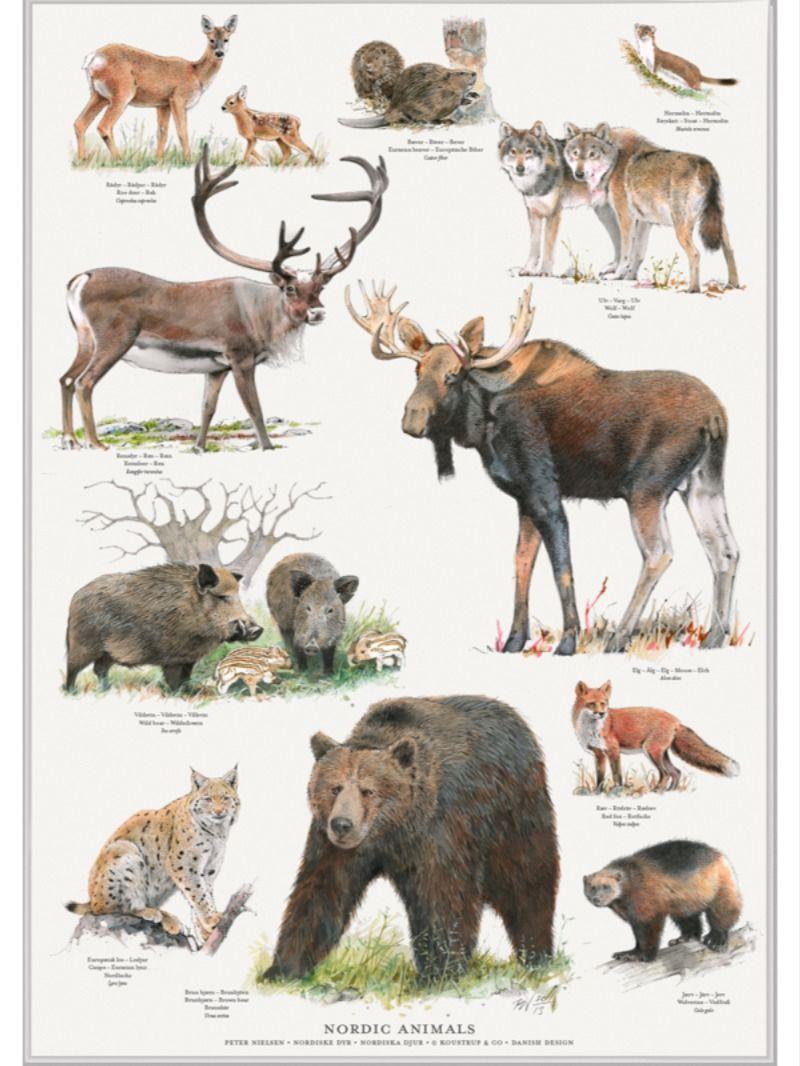 Nordens Dyr Plakat Nordic Animals Poster In 2020 Animals Animal Posters Moose Art