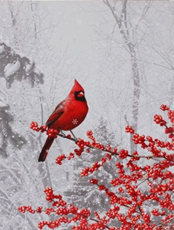 Check out the deal on Raz 24 Inch Twinkling LED Lighted Cardinal Scene Print On Canvas at Battery Operated Candles
