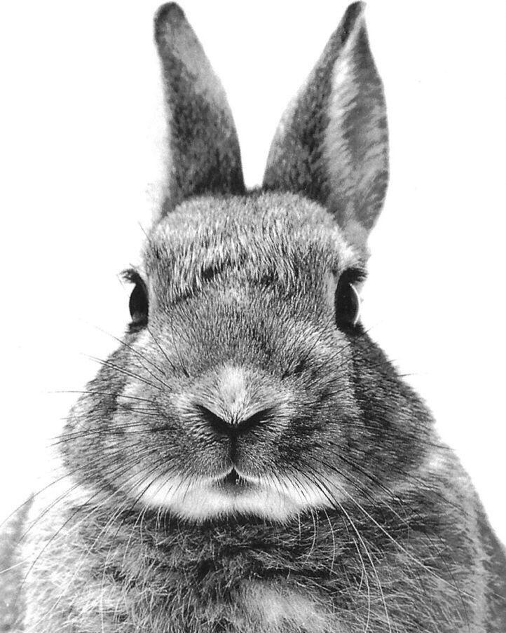 прозвали черно белая картинка на телефон кролик в лунку времен