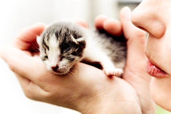 Think You Can't Foster Kittens? We've Got 7 Reasons Why