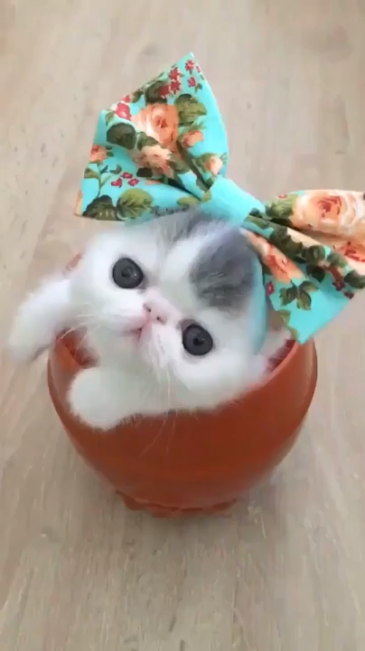 Cute Cat Baby Funny White Kitty Video