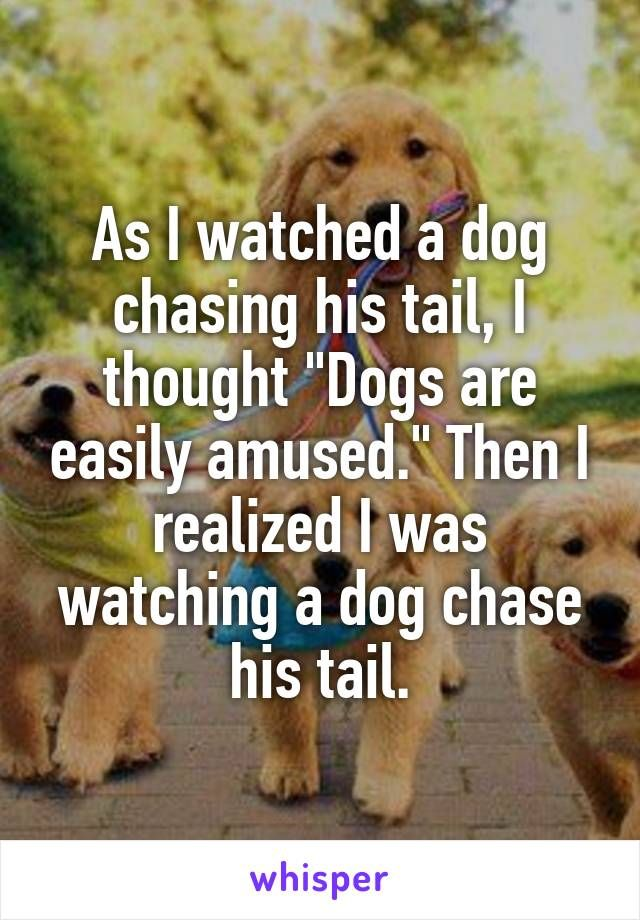 Dog Chasing Tail Meme : chasing, Watched, Chasing, Tail,, Thought,