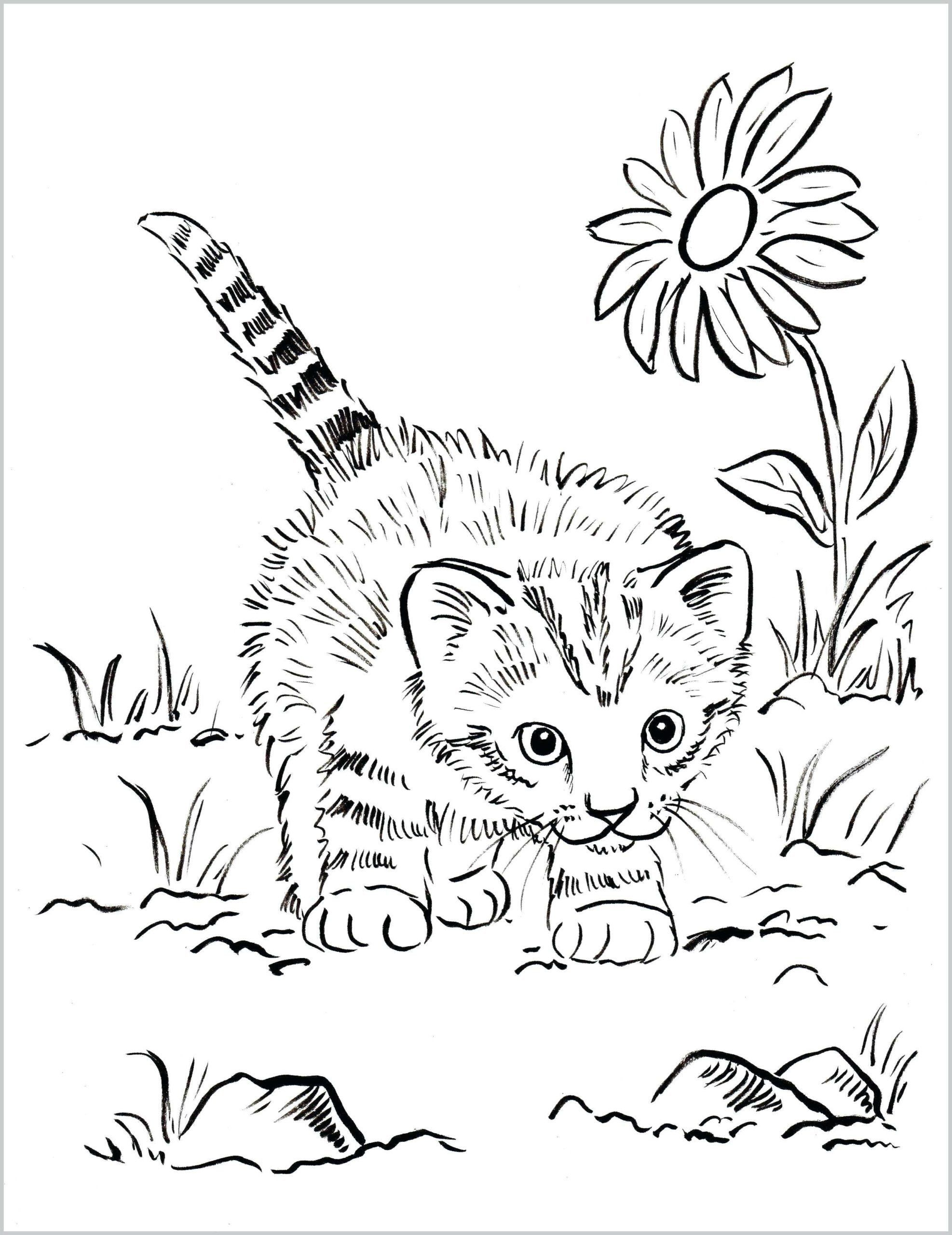 Kitten Coloring Pages For Kids Pages Coloring Excelent Kitten Coloring Book Page Clip Art Cat Coloring Book Puppy Coloring Pages Kittens Coloring