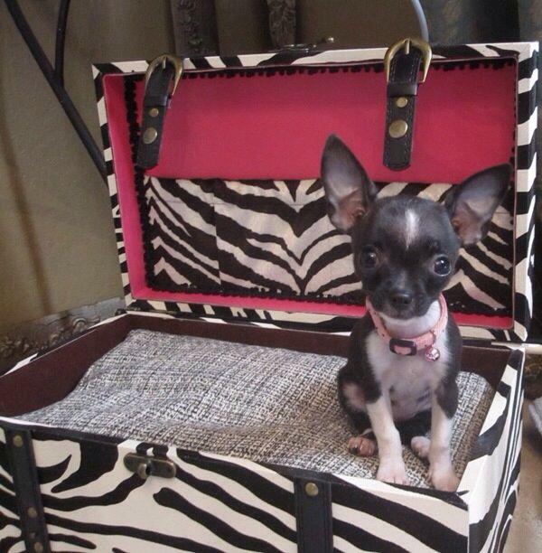 Zebra Print Pup Bed Zebraprintbedding Unique Dog Beds Pet Beds