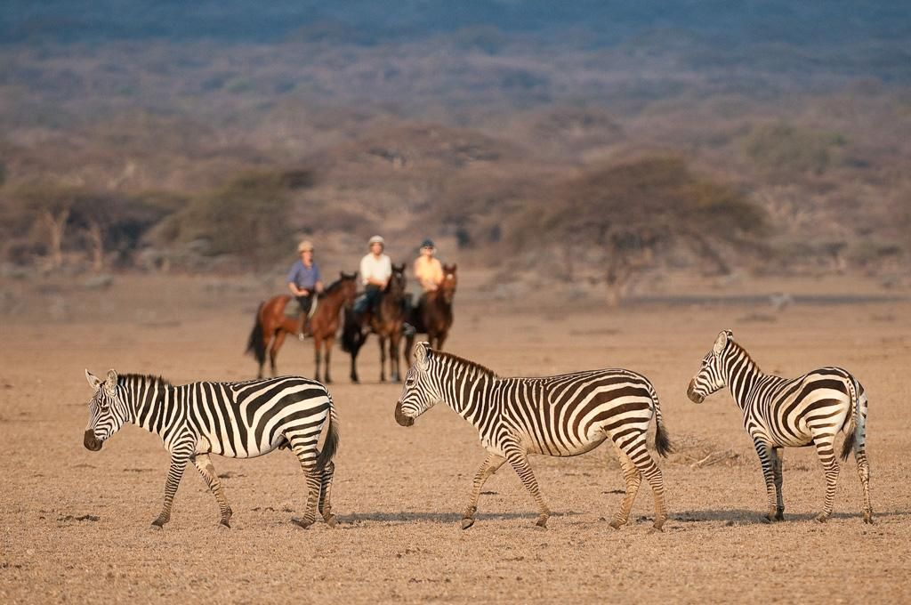 Pin on African Adventures