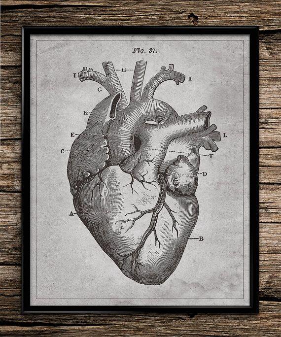 Heart Anatomy | Vintage Wall Art | Vintage Anatomy | Human Anatomy ...
