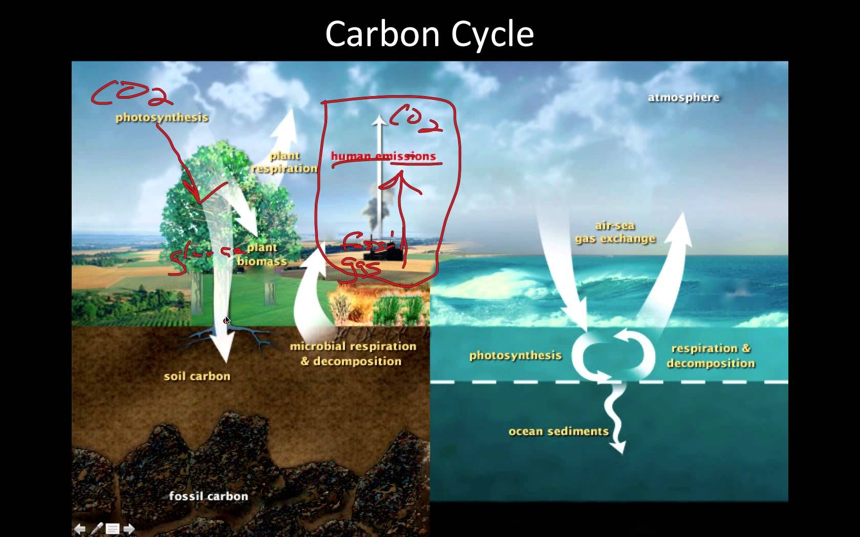 Cycles In The Ecosystem Water Cycle Carbon Cycle Nitrogen Cycle