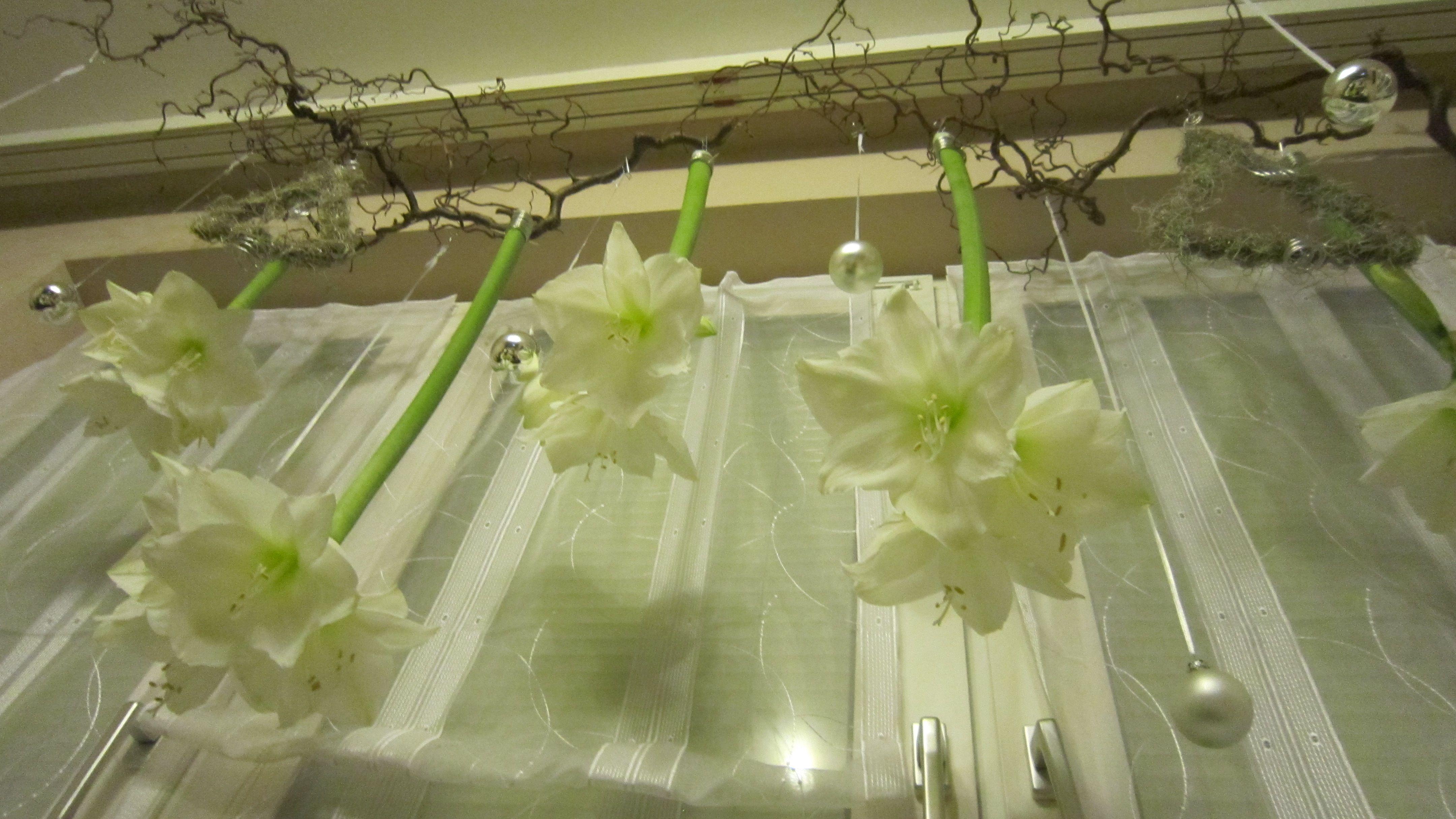 Fensterdeko weiße Amaryllis