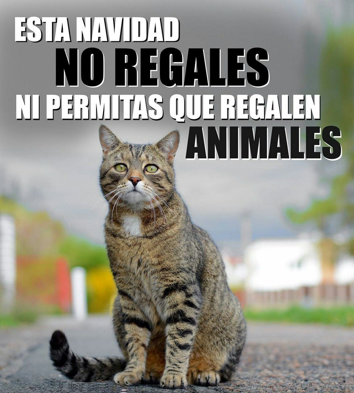 Pin de Transi Ortega en Animales Animales, Permitiendo
