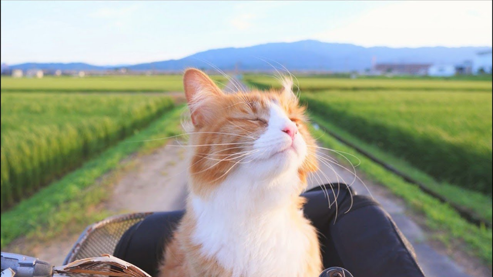 Cat sitting in a bicycle basket, closing its eyes to enjoy the sun and the breeze. Behind