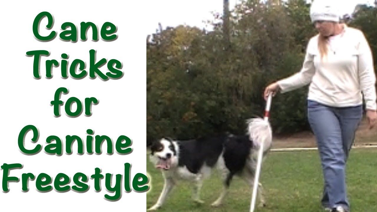 Canine freestyle: a selection of quotes