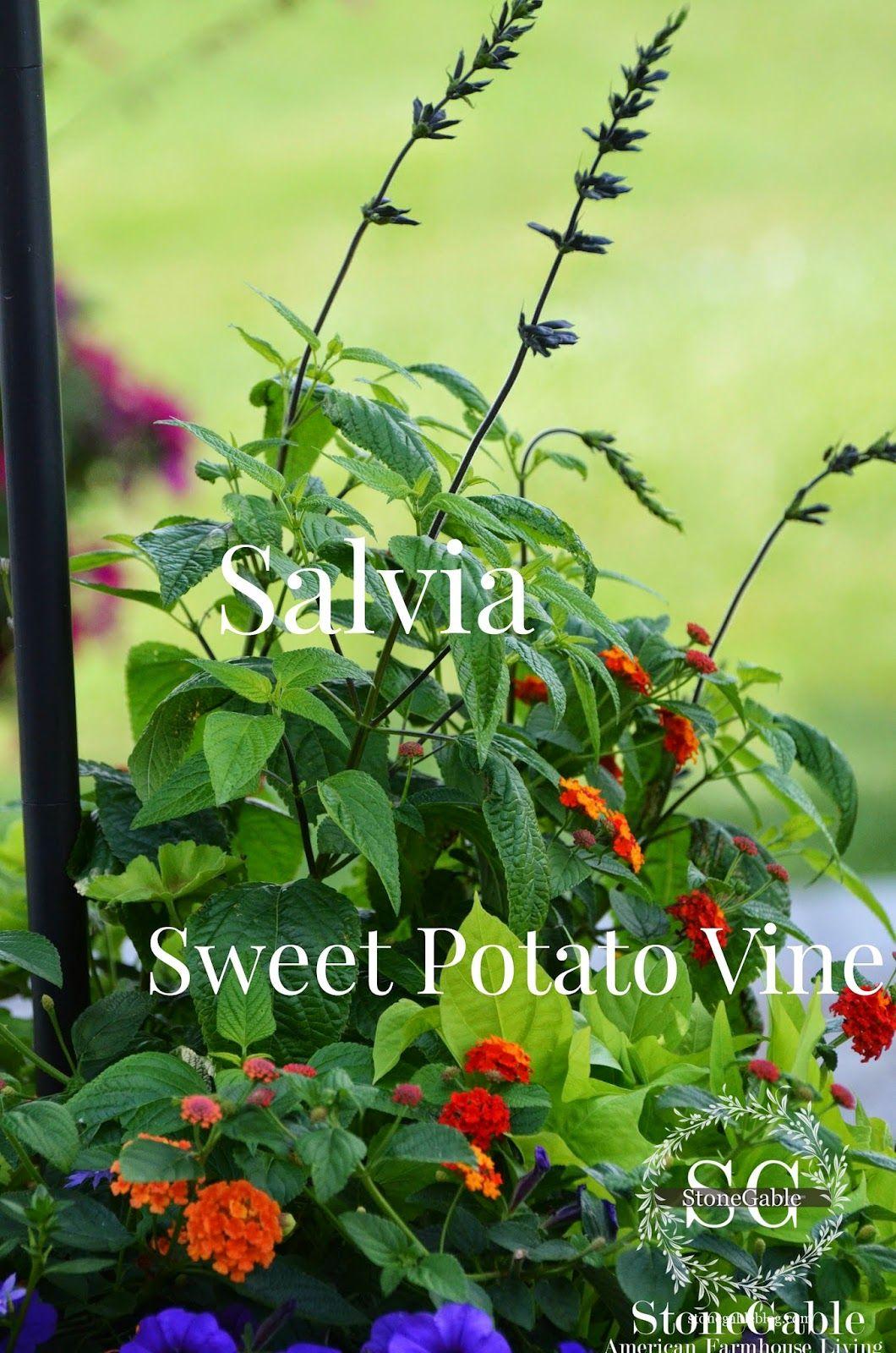 THE ANATOMY OF A FLOWER POT | Pinterest | Anatomy, Flower and Gardens