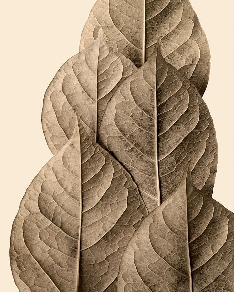 Autumn Leaves Still Lifeby Jeff Friesen