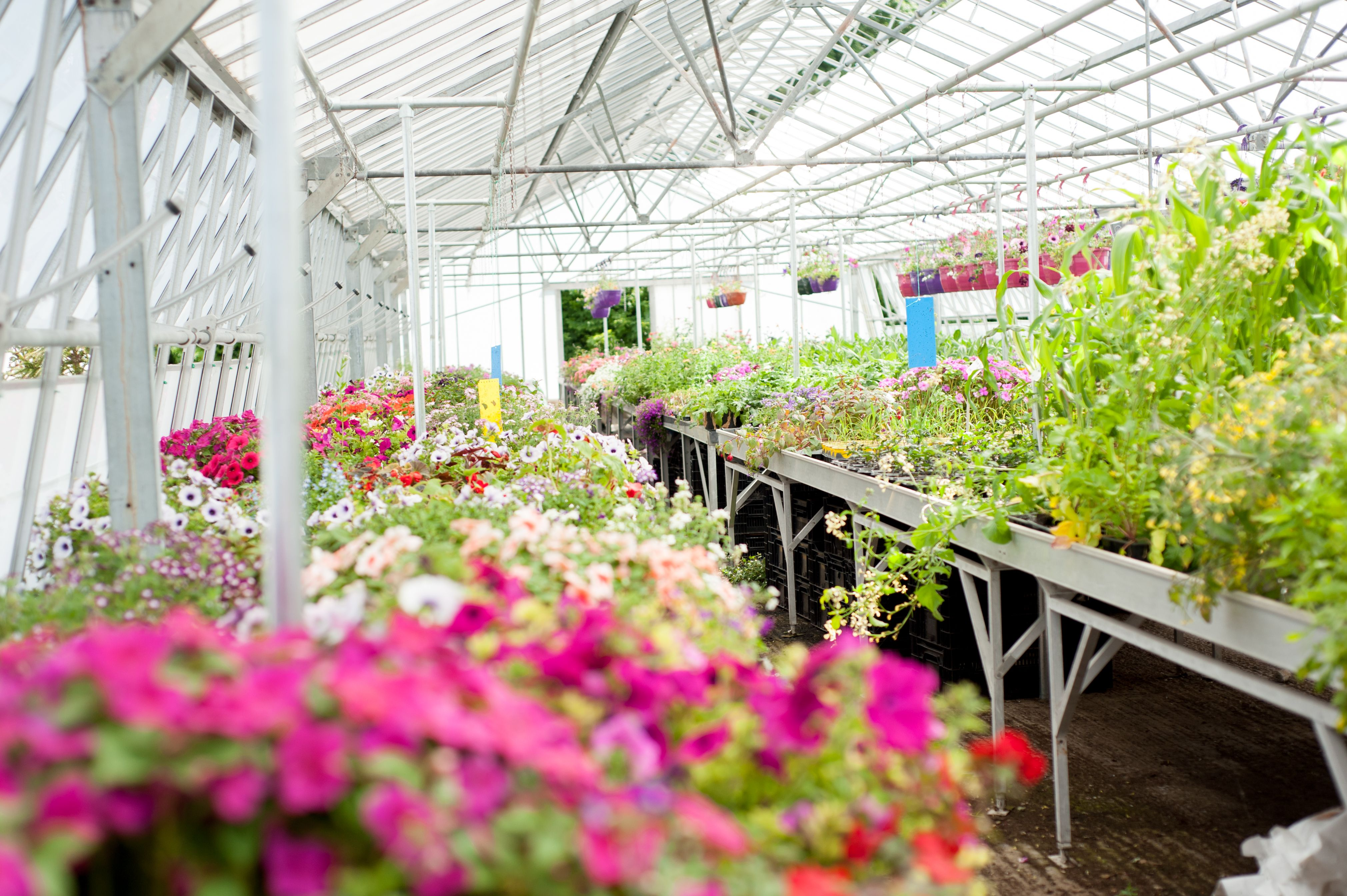 King S Park Nursery Selling Hanging Baskets And Flower Troughs