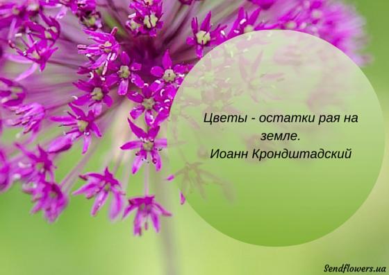 Короткие афоризмы о цветах