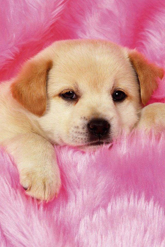 Awwwwwwww It S Soooo Cute Really Cute Puppies Cute Dog Wallpaper Cute Dogs And Puppies