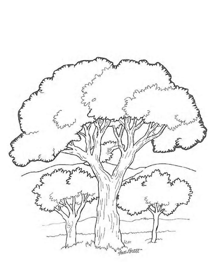 Printable Tree Coloring Pages