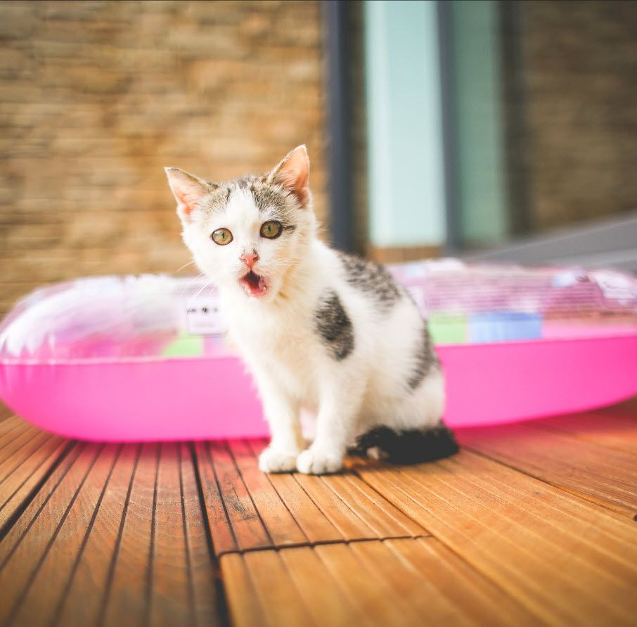 The A to Z of Most Popular Cat Names Most popular cat