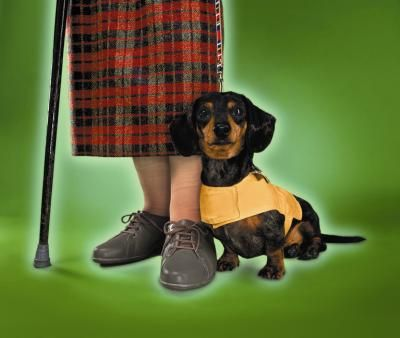 Dachshunds Come In Two Sizes And Three Coat Lengths Standard And