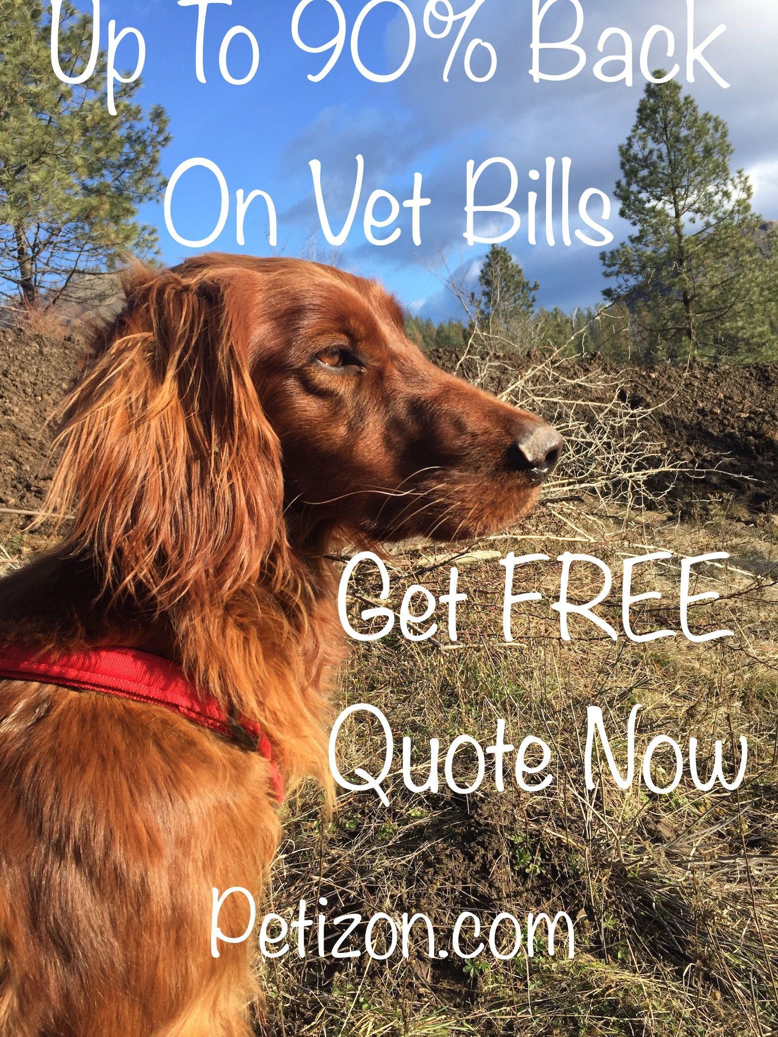 Pet Care Pets Pet Insurance in 2020 Vet bills