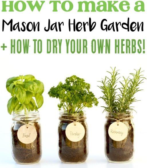 DIY Mason Jar Herb Garden! {Indoor Herbs for the Kitchen} #indoorgardening