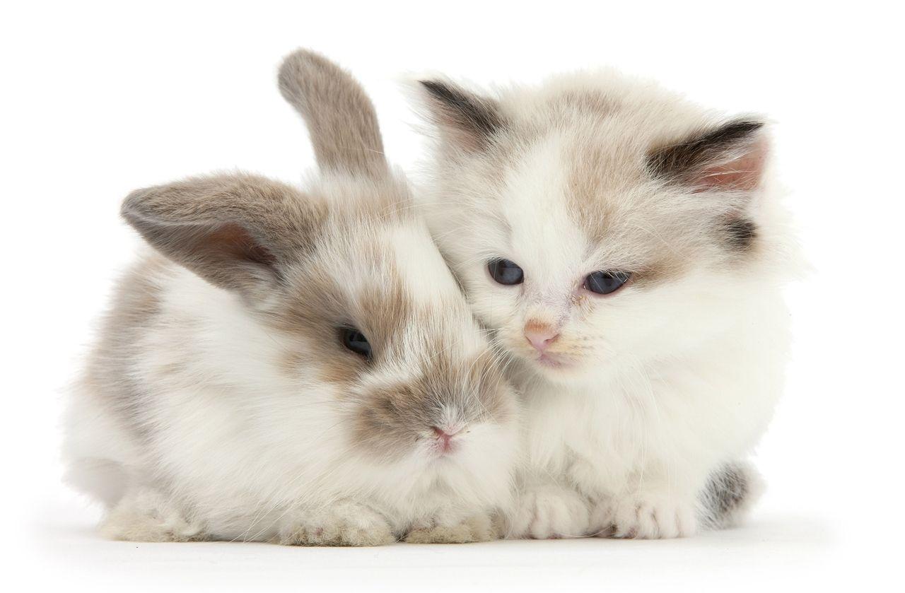 здоровым, картинки с котятами и крольчатами то, что откровенные
