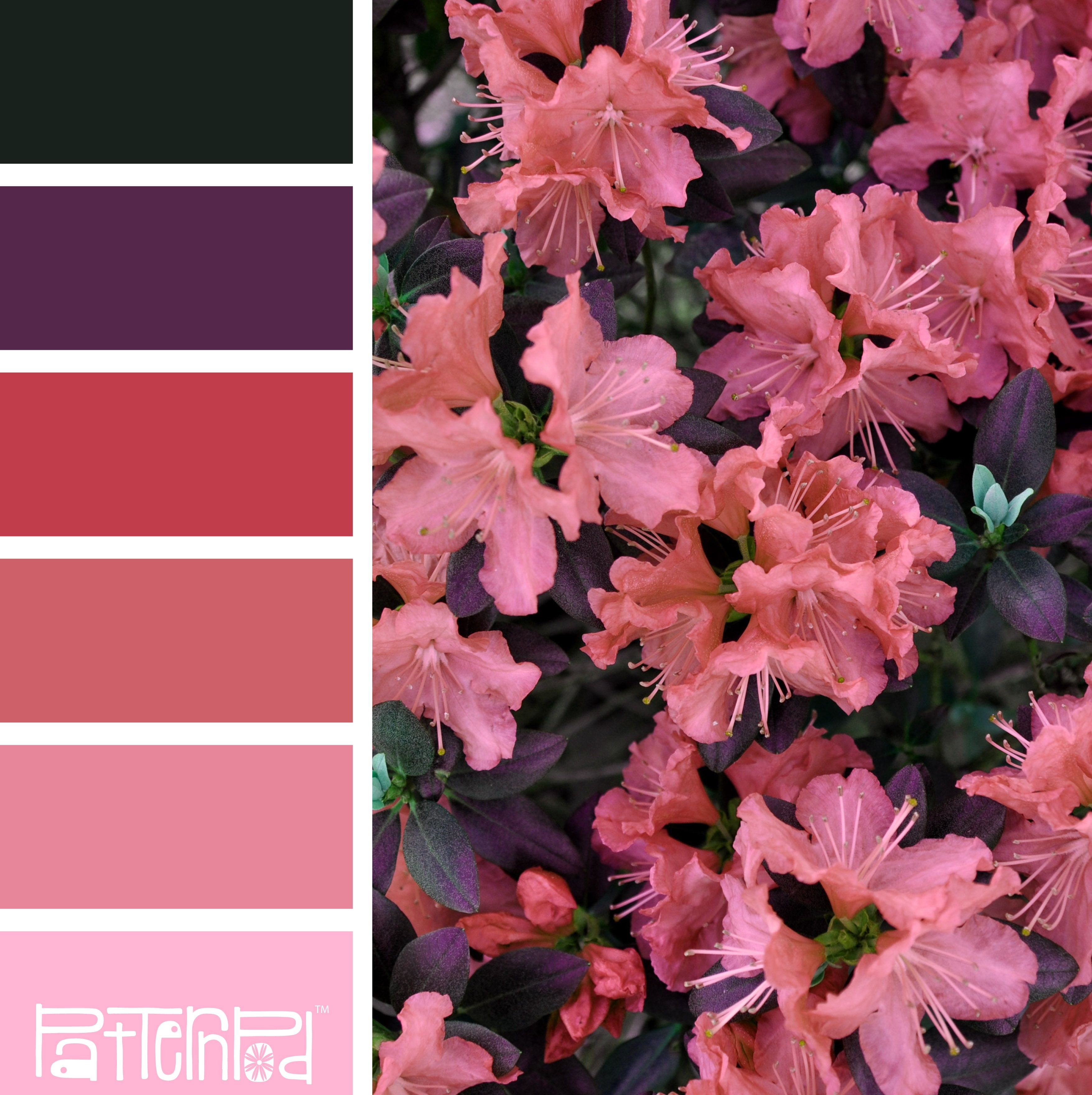 Color Palette, Flowers, Coral, Pink, Purple. If you like our color ...