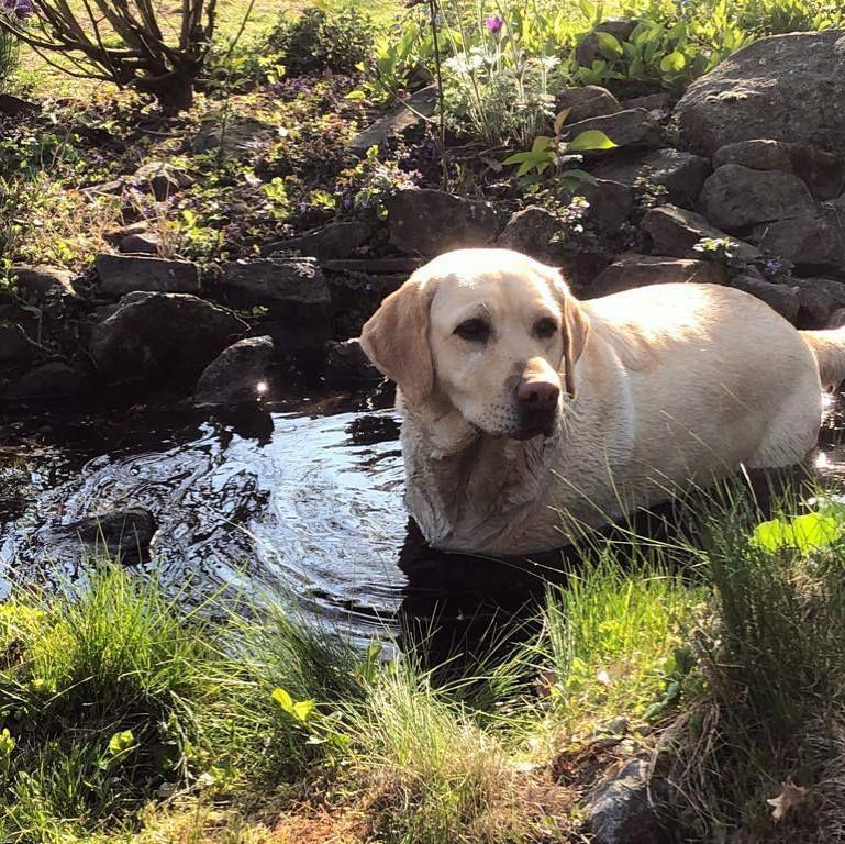 Pin Von Floxik De Hundezubehor Auf Instagram Hunde Fotos