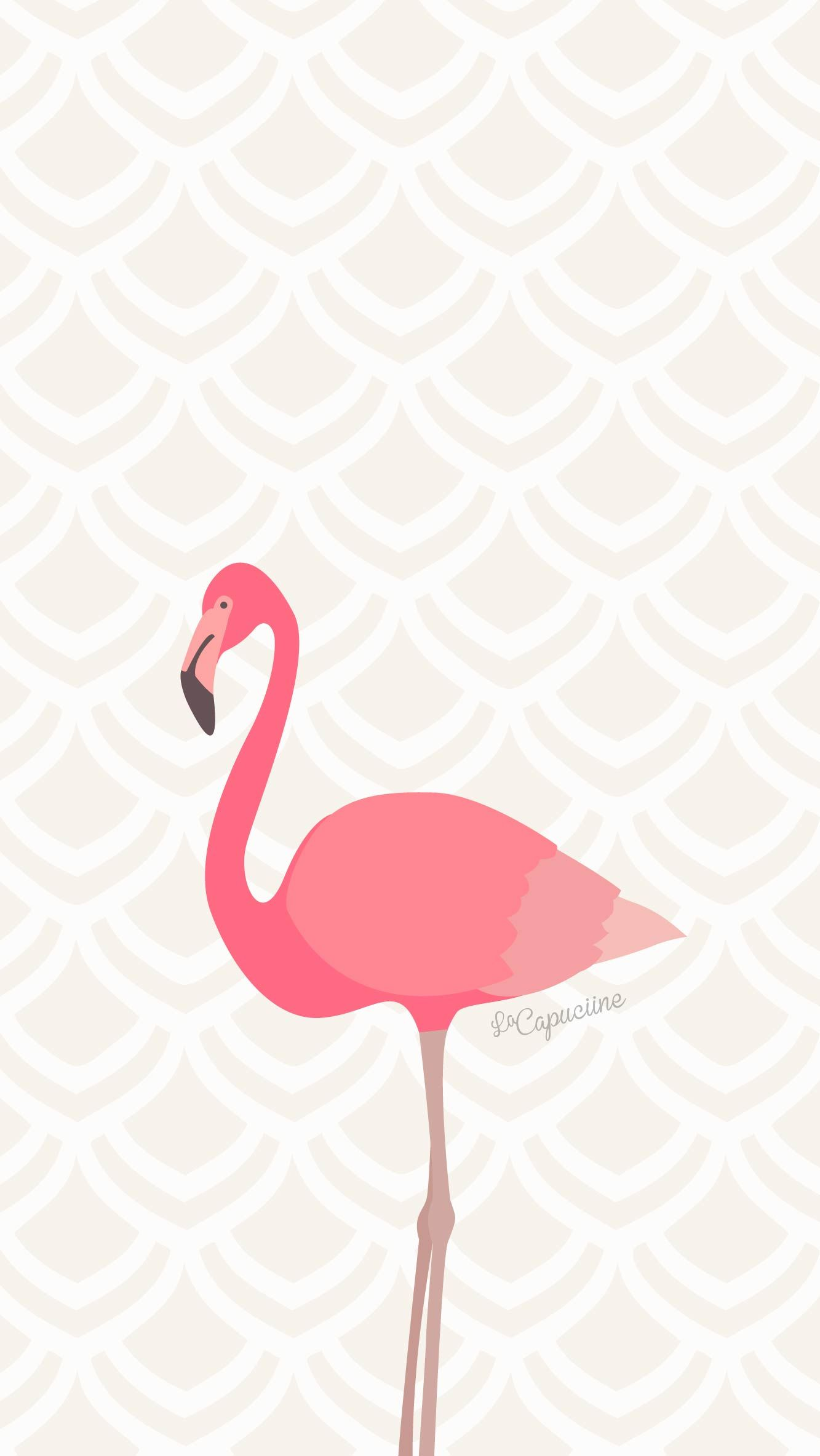 Fond d 39 cran flamant rose la capuciine for Fond ecran rose