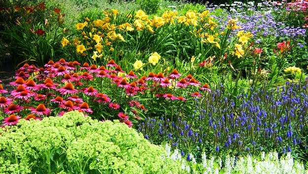 Types of perennials flower gardens pinterest perennials perennials mightylinksfo