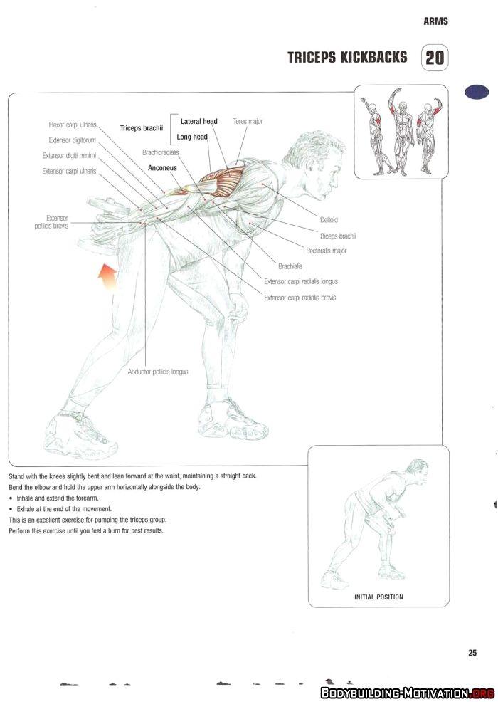Training Anatomy - Arms - Triceps Kickbacks | Gym - Arms | Pinterest ...