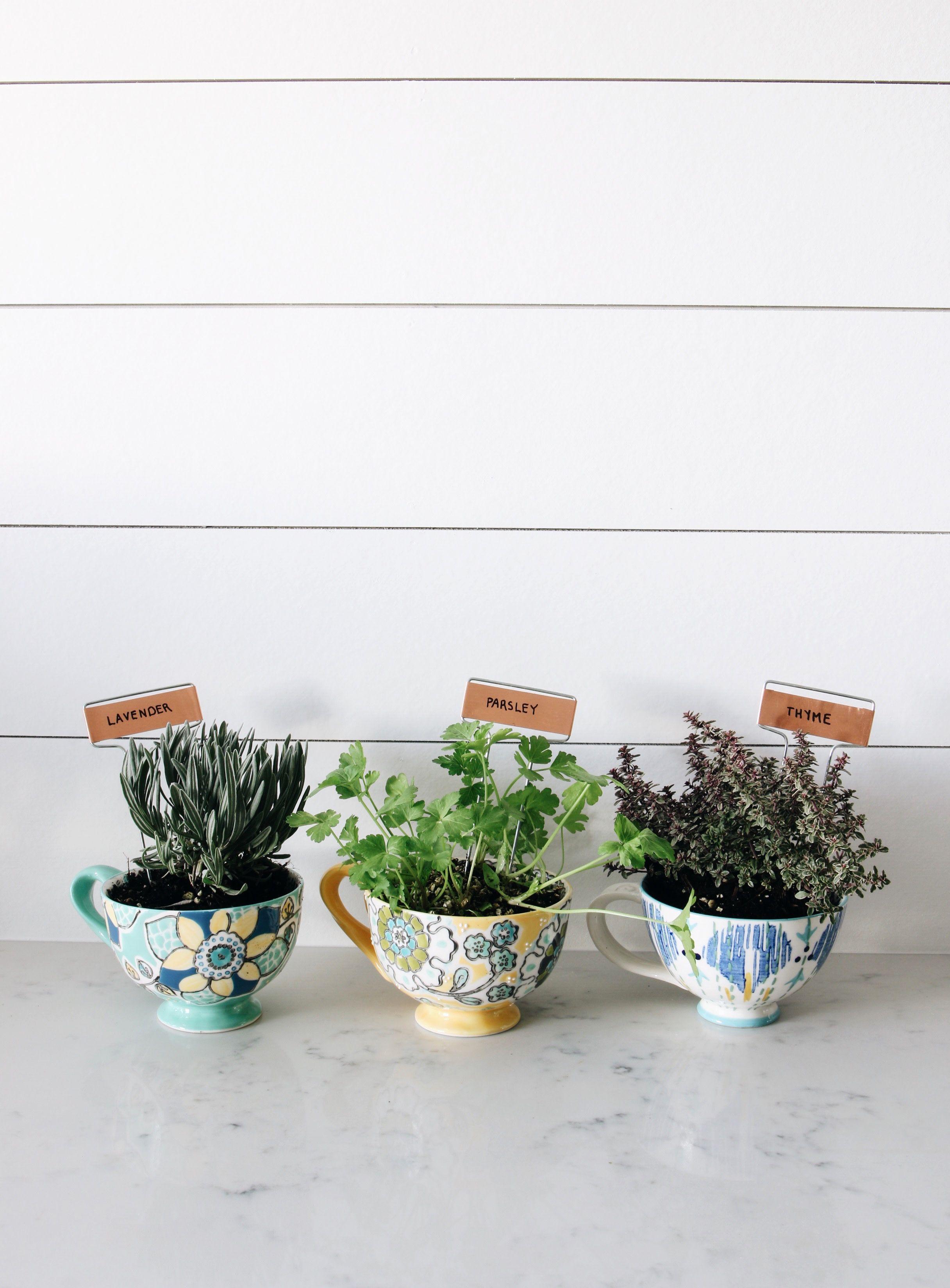 DIY Coffee Mug Herb Garden #herbsgarden