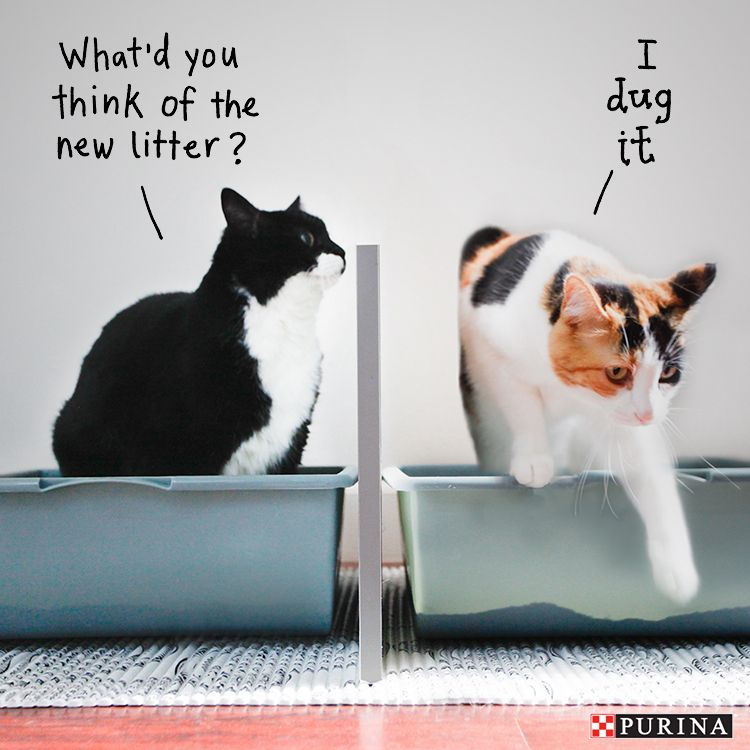 Begin litter box training kittens by placing them in the litter box every hour. Read & Begin litter box training kittens by placing them in the litter ... Aboutintivar.Com